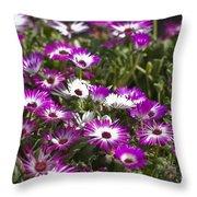 Mesembryanthemums 5 Throw Pillow