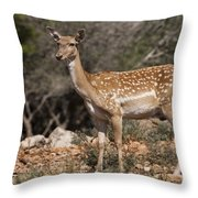 Mesopotamian Fallow Deer 2 Throw Pillow