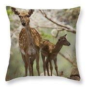 Mesopotamian Fallow Deer 4 Throw Pillow