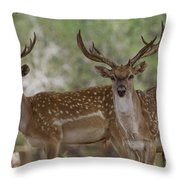 Mesopotamian Fallow Deer 5 Throw Pillow