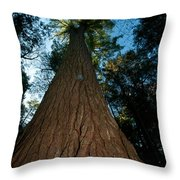 Methuselah Throw Pillow