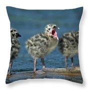 Mew Gull Three Chicks Throw Pillow by Tom Vezo