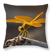Mexican Amberwing Throw Pillow