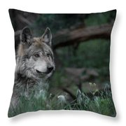 Mexican Grey Wolf Throw Pillow