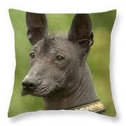 Mexican Hairless Dog Throw Pillow