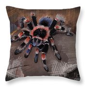 Mexican Redknee Tarantula Throw Pillow