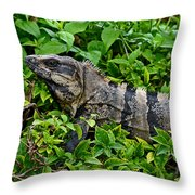 Mexican Spinytailed Iguana  Throw Pillow