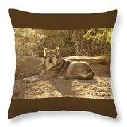 Mexican Wolf Close Up Throw Pillow