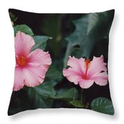 Mexico Pink Beauties By Tom Ray Throw Pillow