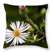 Michaelmas Daisy Throw Pillow