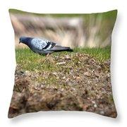 Michigan Rock Pigeon Throw Pillow