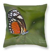 Micro Wings... Throw Pillow