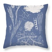 Microdyctyon And Cladophora Throw Pillow by Aged Pixel