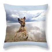 Mid-air Beach Dog Throw Pillow by Eldad Carin
