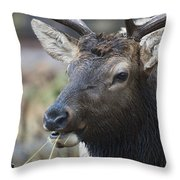 Mid-day Munch Throw Pillow