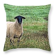 Middle Child - Blackfaced Sheep Throw Pillow