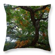 Mighty Fall Oak #2 Throw Pillow