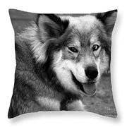 Miley The Husky With Blue And Brown Eyes - Black And White Throw Pillow by Doc Braham