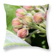 Milkweed Before Bloom Throw Pillow
