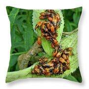 Milkweed Bug Nymphs - Oncopeltus Fasciatus Throw Pillow