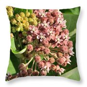 Milkweed Flowers In Bud Throw Pillow