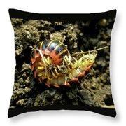 Millipede Polydesmida - Sigmoria Aberrans Throw Pillow