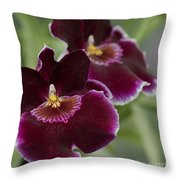Miltoniopsis Rouge 'california Plum'  Macro  2692 Throw Pillow