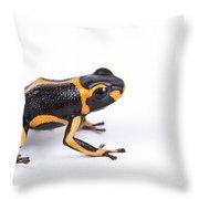 Mimic Poison Dart Frog Throw Pillow