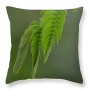Mimosa Fronds In Spring Throw Pillow