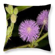 Mimosa Pudica  Throw Pillow