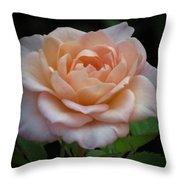 Mini Rose Throw Pillow