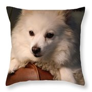 Miniature American Eskimo Lounging    Throw Pillow