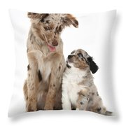 Miniature American Shepherd With Puppy Throw Pillow
