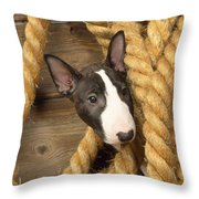 Miniature Bull Terrier Puppy Throw Pillow