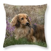 Miniature Long-haired Dachshund Throw Pillow