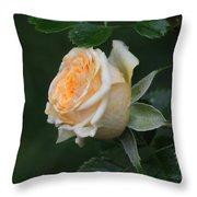 Miniature Rose In The Rain Throw Pillow