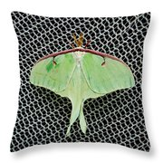 Mint Green Luna Moth Throw Pillow