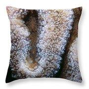 Miscellaneous 4 Throw Pillow