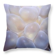 Miscellaneous 6 Throw Pillow