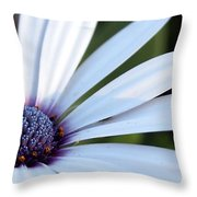 Mission Flower 4480 Throw Pillow