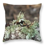 Misty Moss Throw Pillow