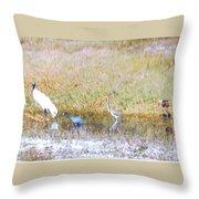 Mixed Shore Birds Throw Pillow