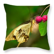 Mocker Swallowtail Butterfly And Berries Throw Pillow