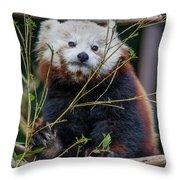 Mohu The Teenage Red Panda Throw Pillow