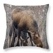 Mom And Young Moose Throw Pillow