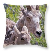Momma And Baby Ram Throw Pillow