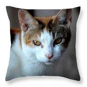 Momma Cat Throw Pillow
