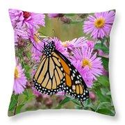 Monarch 1 Throw Pillow