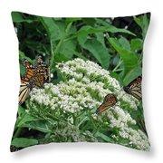 Monarch Butterfly 47 Throw Pillow