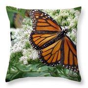 Monarch Butterfly 52 Throw Pillow